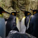 Императорский пингвин обновил рекорд, погрузившись в воду на 32,2 минуты