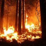 Источник: Число погибших во время пожаров в Греции выросло до 91 человека