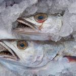 У браконьеров на Камчатке изъяли 2,5 тонны лосося и 4,5 тонны икры