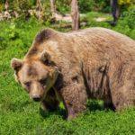 В Магаданской области медведь набросился на человека